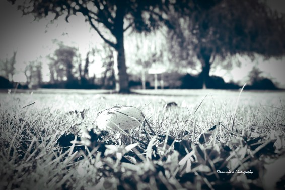 IMG_0334_InPixio